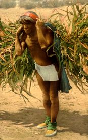 Indian worker bringing in the harvest, photo by the Detroit Publishing Company, about 1900