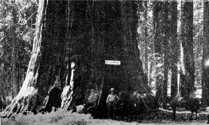 General Sherman Tree in Sequoia National Park, California