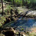 Buzzard Roost Spring, Natchez Trace, Alabama