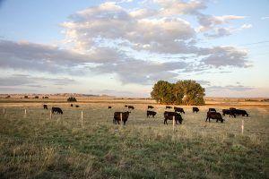 Goshen County, Wyoming by Carol Highsmith