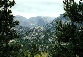 Rocky Mountain Foliage