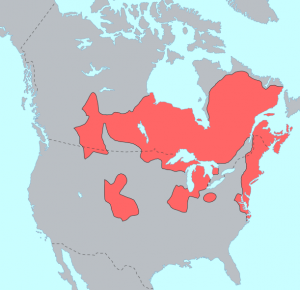 Algonquian Language Distribution courtesy of Wikipedia