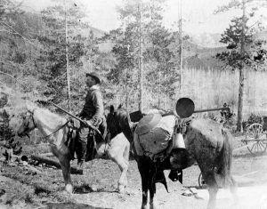 Montana Gold Miner