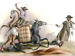 Spanish Pack Mule