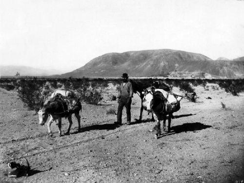 Desert Prospector