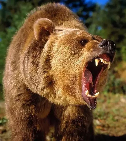 "John ""Grizzly"" Adams – Bear Hunter – Legends of America"