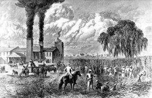 Sugar Plantation in Louisiana