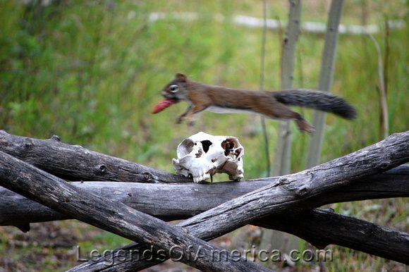 Squirrel jumping a skull in Vicksburg, Colorado