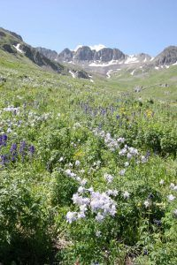 American Basin, Colorado, courtesy US Forestry Service