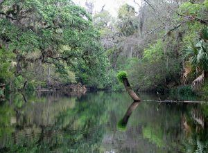 Hillsborough River. Florida courtesy Wikipedia