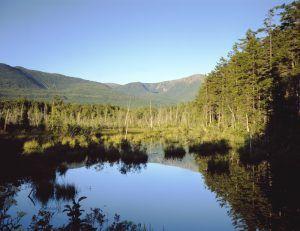Moose bog near Mount Katahdin, Maine by Carol Highsmith.