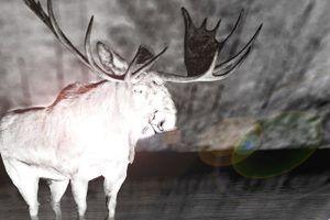 Specter Moose of Maine