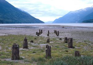 Remaining posts of the dock at Dyea Alaska by Jet Lowe, 2000