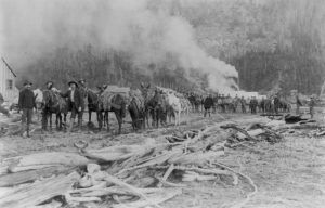 A pack train in Skagway, Alaska, 1897.