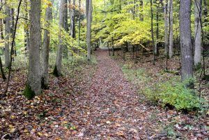 Braddock Road near Fort Necessity, Pennsylvania courtesy Wikipedia