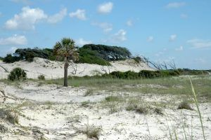 Cumberland Island Dunes by the National Park Service