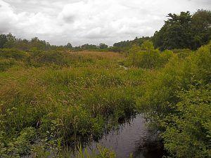 Hockomock Swamp, Massachusetts by Charles Wohlers, Flickr