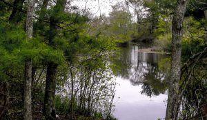 Hockomock Swamp, Bridgewater Triangle, courtesy Roadtrippers