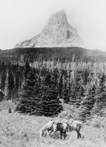 Chief Mountain in Glacier National Park, about 1920.