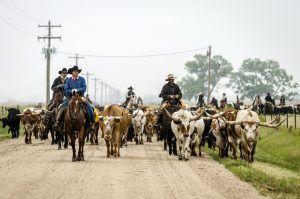 Modern day cattle drive in Ellsworth, Kansas by Doug Stremel, Travel Kansas.