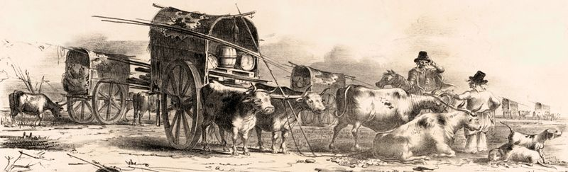 Mexican Wagons and Oxen
