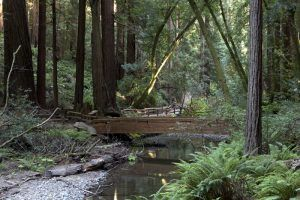 A bridge in Muir Woods today by Carol Highsmith.
