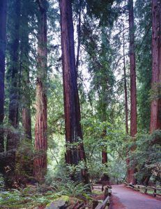 Muir Woods, California by Carol Highsmith.