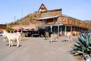 Donkeys roam the streets of Oatman, Arizona by Kathy Weiser-Alexander.