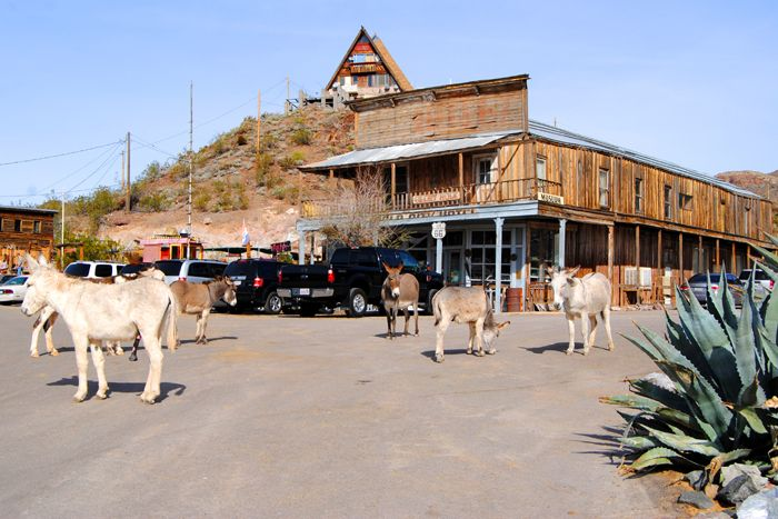 Donkeys roam the streets of Oatman, Arizona by Kathy Weiser-Alexander.