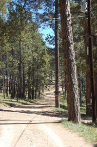 Forested road in Idlewild near Eagle Nest, New Mexico by Kathy Weiser-Alexander.