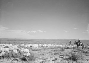 Sheep herding in Wyoming by Arthur Rothstein, 1936.