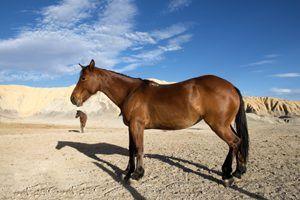 Horses at Big Bend National Park by Carol Highsmith.
