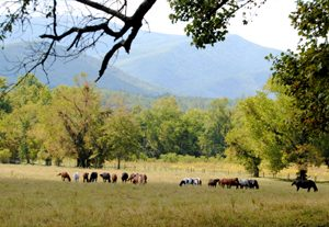 Horses in Smoky Mountain National Park by Kathy Weiser-Alexander.
