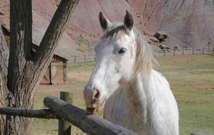 Fruita, Utah - Horse