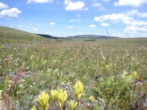 Vipond Park, Montana today courtesy U.S. Forest Service.