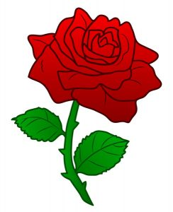 The rose is the nation's national flower.