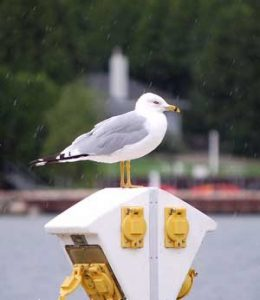 Seagull in the Rain, Eagle Harbor