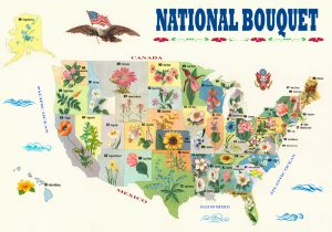National Bouquet of the United States - State Flower Map