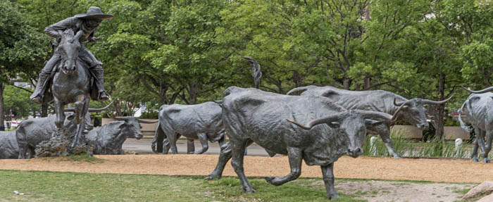 There are 70 bronze steers Pioneer Park in Dallas, Texas by Carol Highsmith.