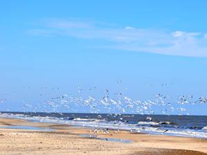Louisiana coastline by Kathy Weiser-Alexander.