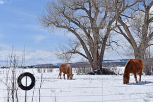 Horses in Ocate, New Mexico by Kathy Weiser-Alexander.